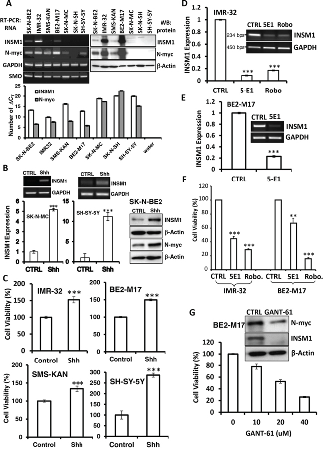 Shh induced INSM1 expression and proliferation in NB cells.
