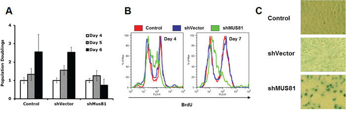 Depletion of MUS81 leads to proliferation arrest and cellular senescence.