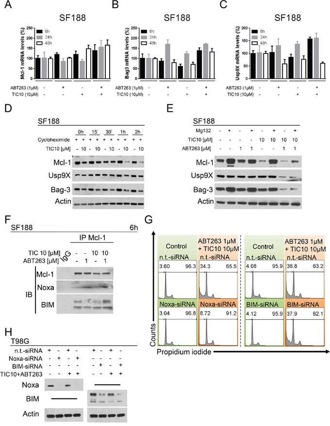 Down-regulation of Mcl-1 is mediated through enhanced proteasomal degradation.