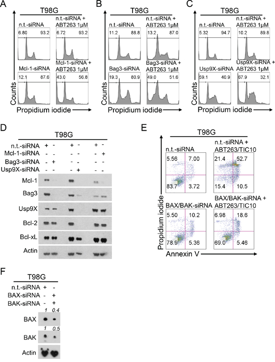 Down-regulation of Mcl-1, Bag3 or Usp9X sensitizes for ABT263-mediated apoptosis and double knock-down of BAX and BAK rescues from TIC10/ONC201/ABT263-mediated apoptosis.