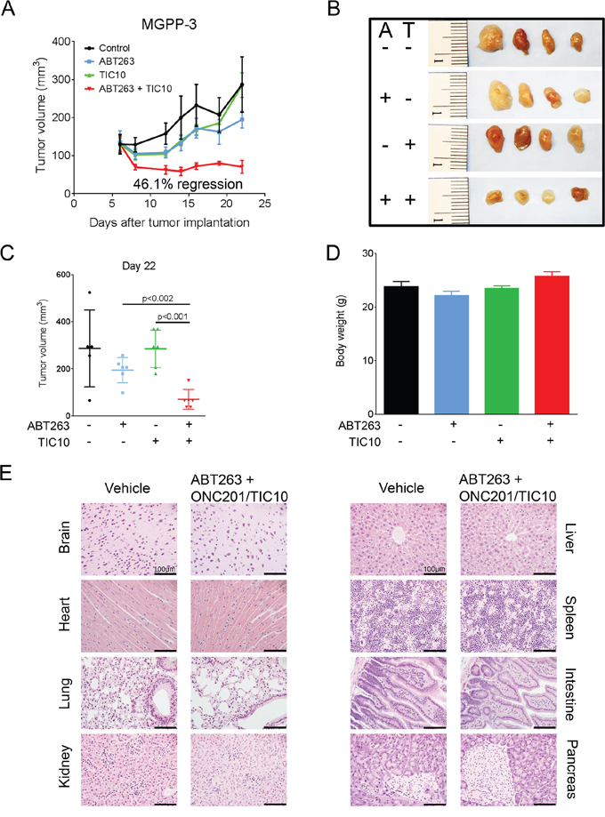 Combined treatment with ABT263 and TIC10/ONC201 results in an enhanced inhibition of tumor growth in vivo.