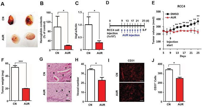 Auraptene inhibits VEGF-induced angiogenesis in vivo.