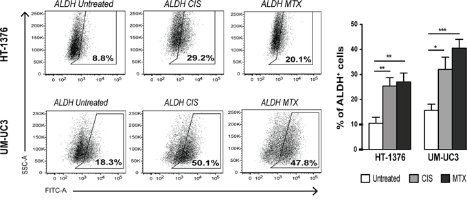 Short-term chemotherapy treatment induces enrichment of ALDH+ cells in BC cell lines.