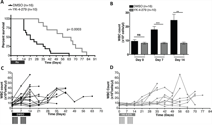 YK-4-279 improved overall survival and disease burden of mice with EWS-FLI1 driven erythroleukemia.
