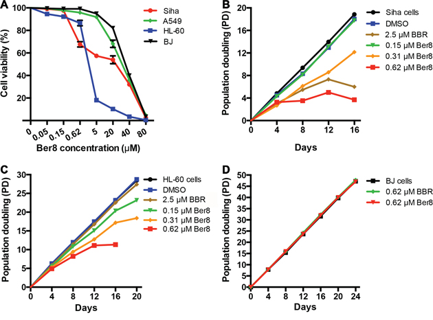 Cancer cell-growth suppression by Ber8 and BBR.
