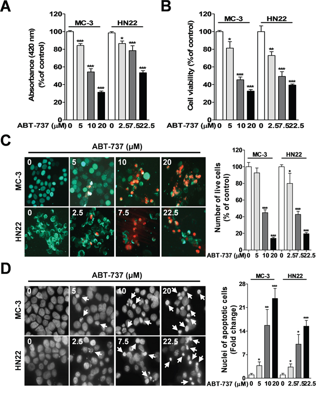 Effect of ABT-737 on cell viability and apoptosis in human oral cancer cells.