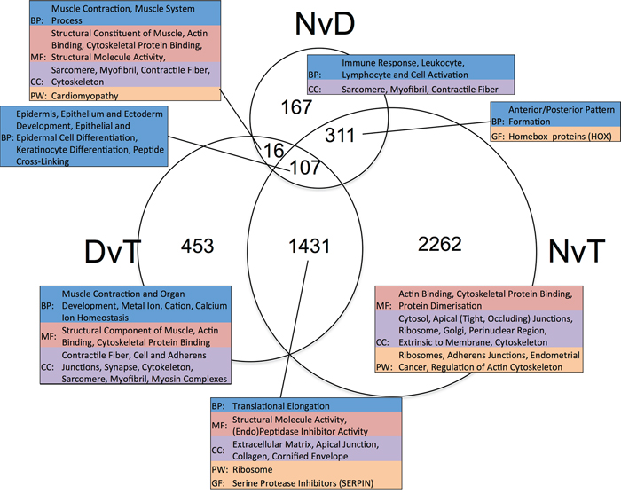 Venn diagram showing the overlap in lists of differentially expressed genes ascertained per pairwise, matched-sample comparison of our dataset.
