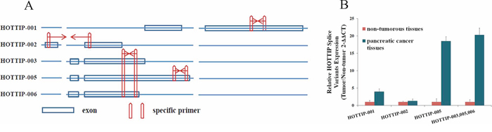 Identification of HOTTIP splice variant expression levels.