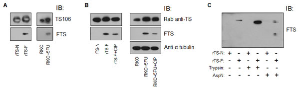 Characterization of moAb FTS.