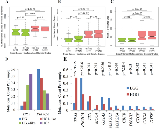 Major genomic and transcriptomic variations between subclasses of IDC determined by 22g-TAG classifier.