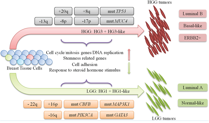 progression model for LGG and HGG tumors.