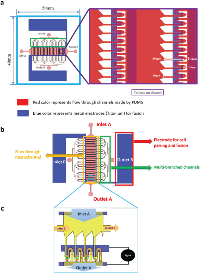 Rapid cell electrofusion device.