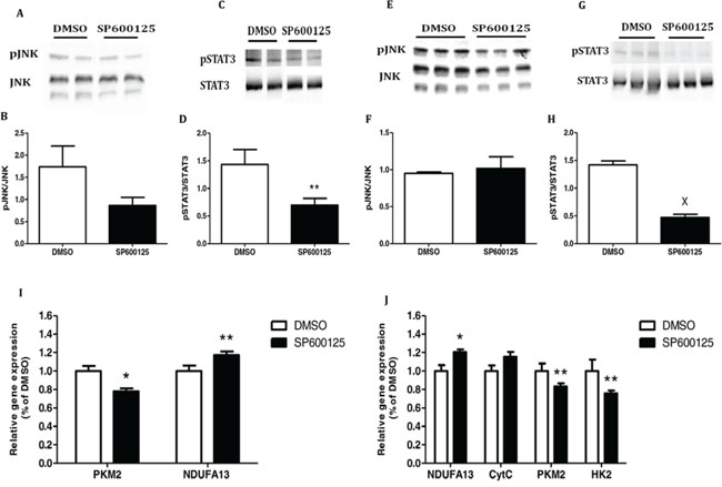 Inhibition of JNK/STAT3 signaling pathway re-establish the mitochondrial function.