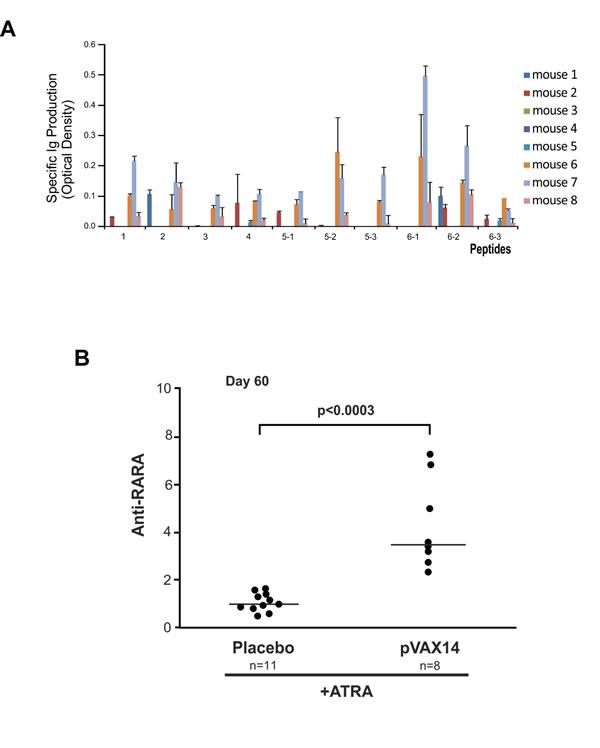 Antibody production of pVAX14-treated APL mice.