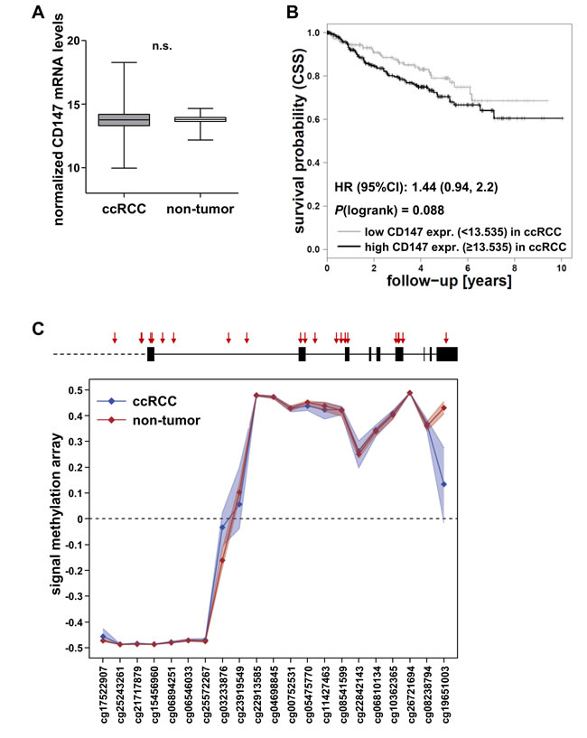 Evaluation of CD147 mRNA levels and CD147/