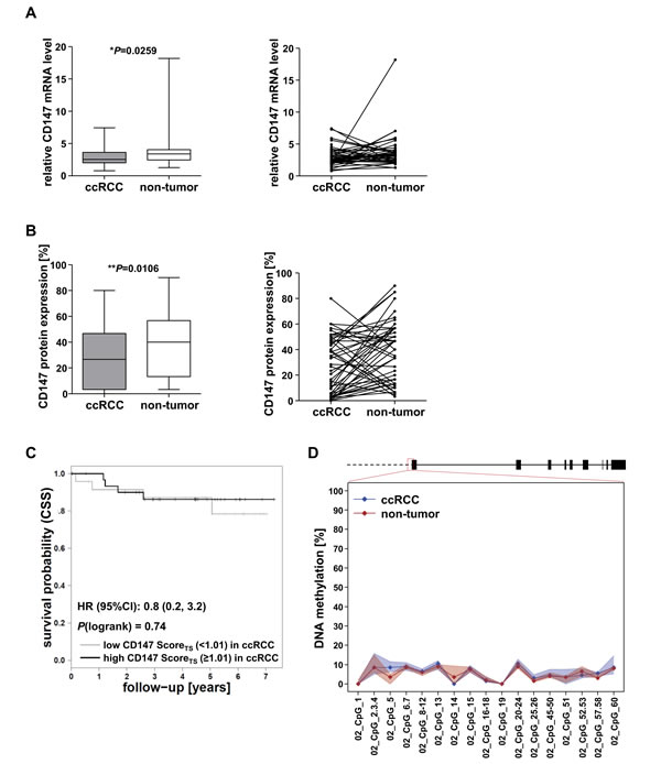 Evaluation of CD147 expression and CD147/