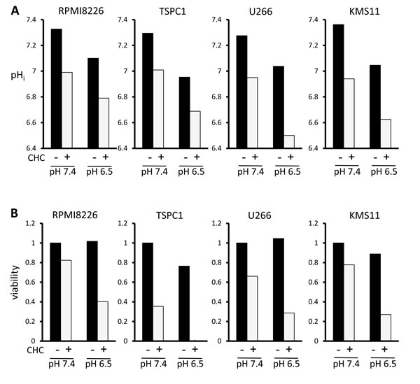 Influence of extracellular pH on intracellular acidification and cytotoxic effects of MCT blockade on MM cells.
