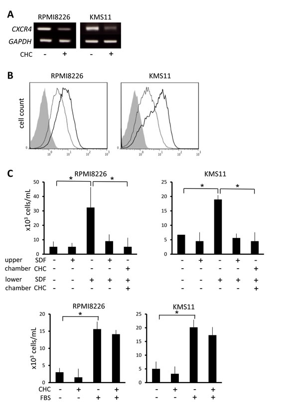 Suppression of CXCR4 expression and migration of MM cells by MCT blockade.