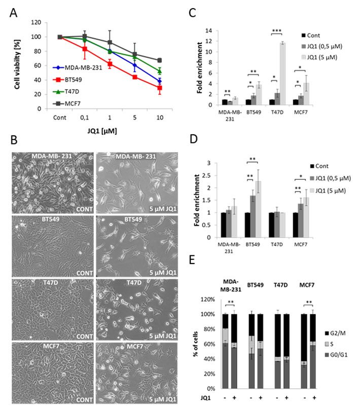 JQ1 decreases cell viability in both TNBC and ER+ breast cancer cell lines.
