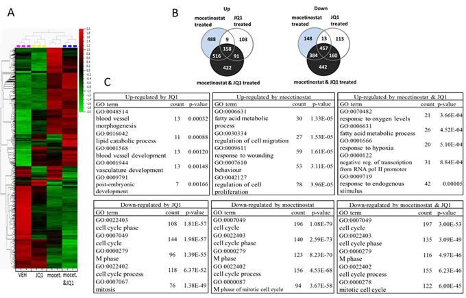 JQ1 and mocetinostat regulate similar cellular pathways mainly involved in cell proliferation, survival and cell cycle progression.