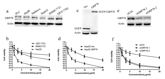 Overexpression of GRP78 confers the resistance to 5-FU in HCC cells.