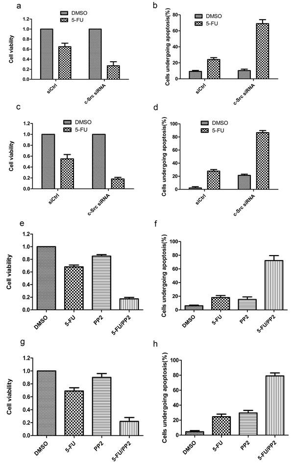 Targeting of c-Src sensitizes HCC cells to 5-FU