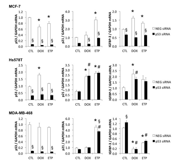 Mutant p53 has little effect on DNA damage-induced p21 and IGFBP-3 mRNA responses.