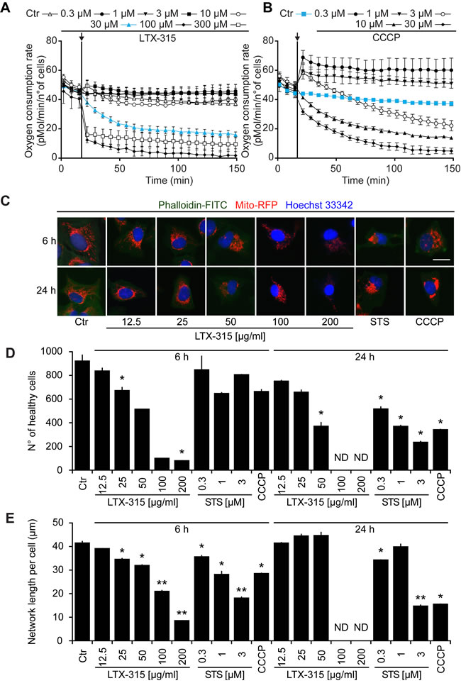 Functional and morphological disruption of mitochondria by LTX-315.