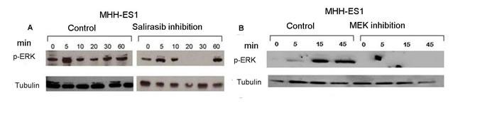 Inhibition of RAS signaling pathway by Salirasib and U0126.
