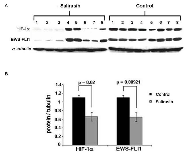HIF-1α and EWS-FLI-1 levels following Salirasib treatment