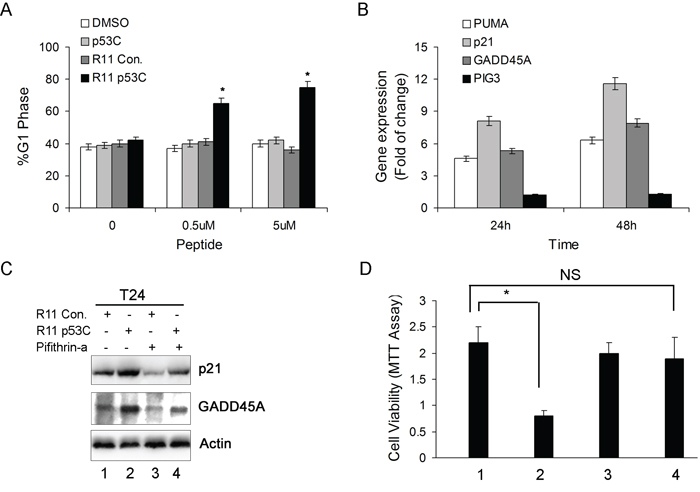 The effect of R11-p53C on p53-regulated gene expression and growth inhibition.