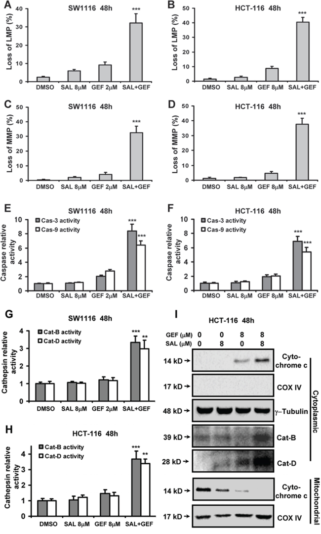 Gefitinib and Salinomycin cooperate to trigger loss of lysosomal membrane potential and mitochondrial membrane potential.
