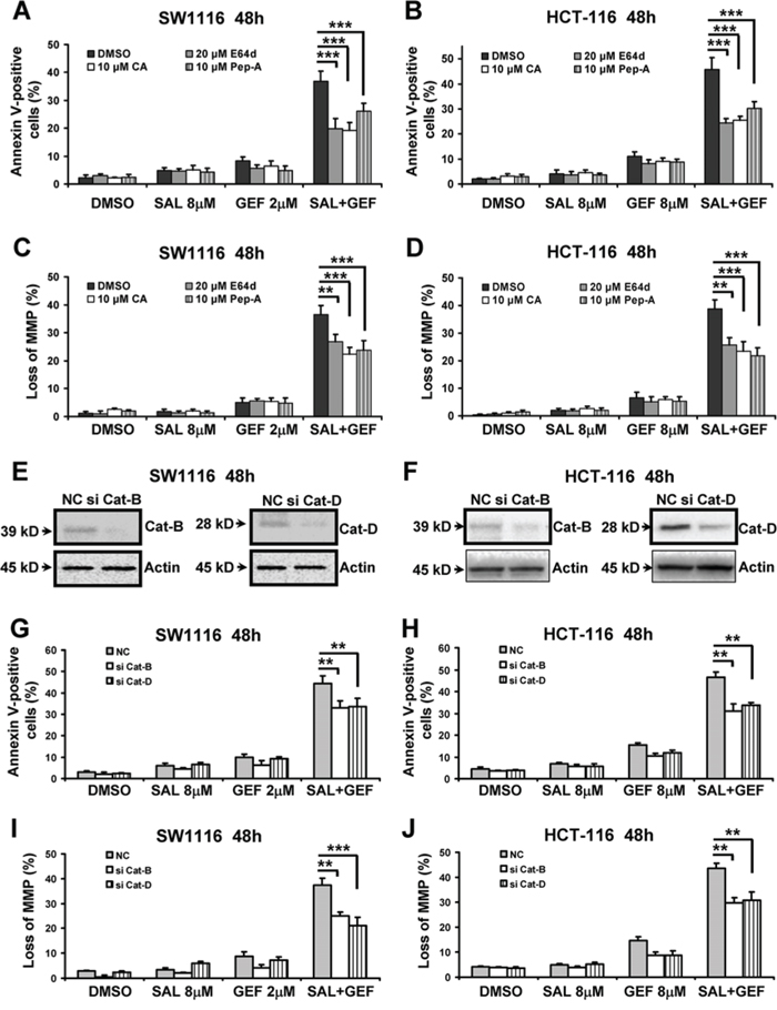 The loss of mitochondrial membrane potential induced by gefitinib and salinomycin in combination involved in cathepsin B and D in colon cancer cells.
