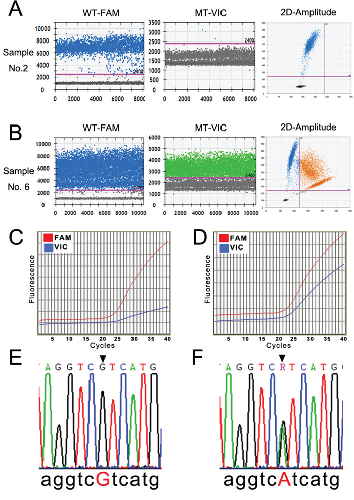 Detection profiles of the IDH1(R132H) mutation by ddPCR, qRT-PCR, and Sanger sequencing.