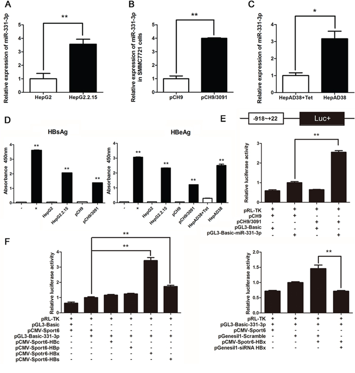 HBV upregulates miR-331-3p expression by enhancing its promoter activity.
