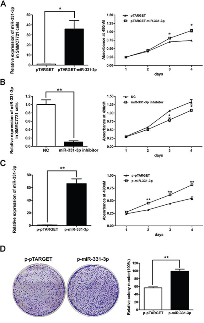 miR-331-3p promotes proliferation of HCC cells.