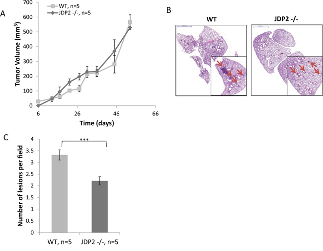 Host derived JDP2 expression promotes metastasis of mammary tumors.