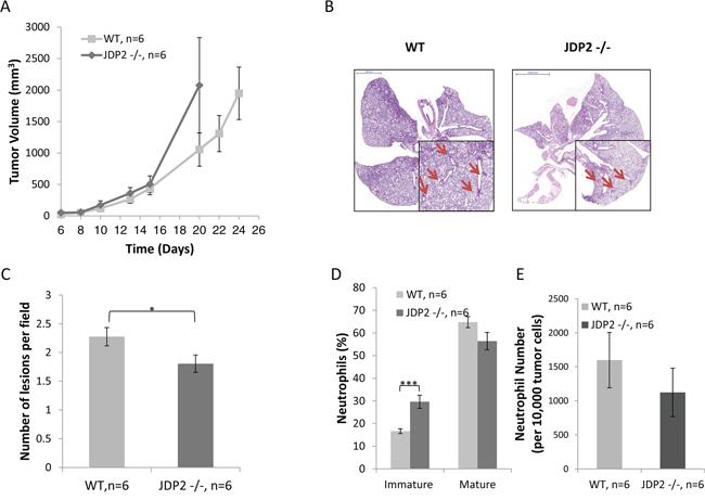 Host derived JDP2 expression inhibits tumor growth but promotes metastasis.