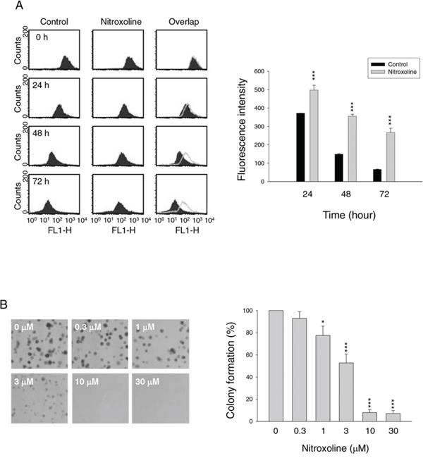 Effect of nitroxoline on anti-proliferation.