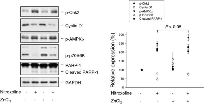 Effect of ZnCl2 supplementation on nitroxoline-induced effect.