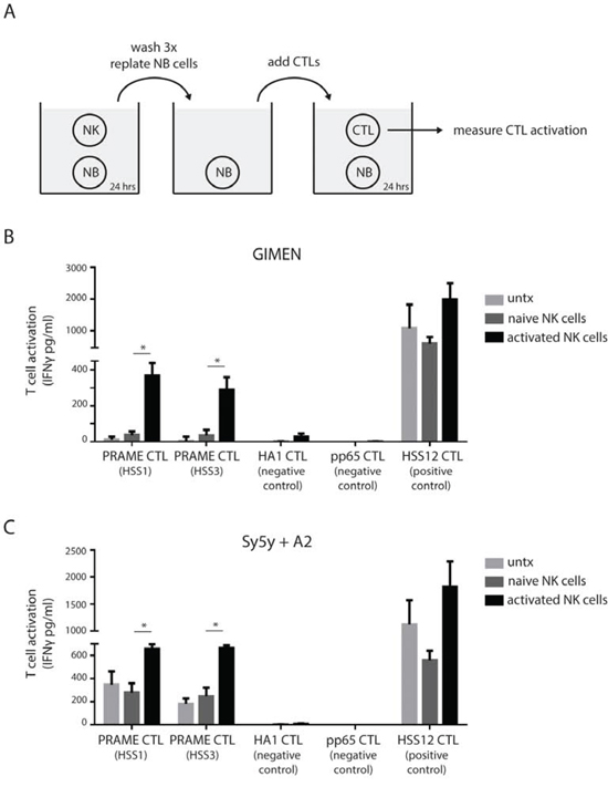 NK cells transform neuroblastoma cells into PRAME CTL targets.