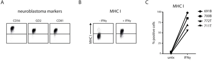 Patient-derived stage 4 neuroblastoma cells show IFNγ-induced MHC I upregulation.