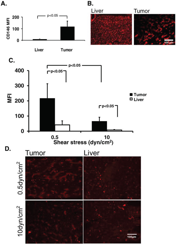 Avidity of endothelial epitope affects shear stress-dependent nanoparticle binding in vitro.