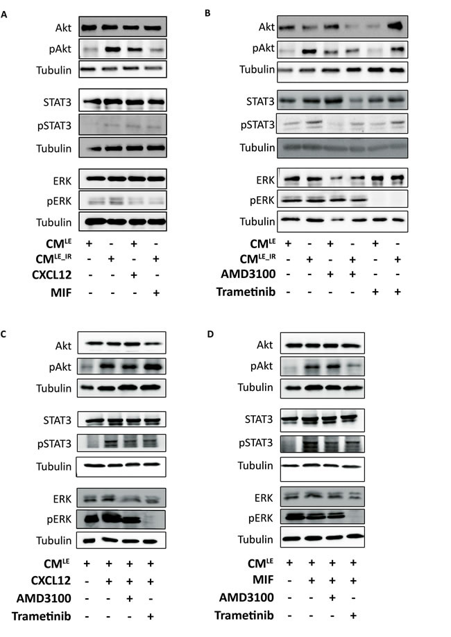 Paracrine activation of ERK, Akt and STAT3 in breast cancer cells by CM