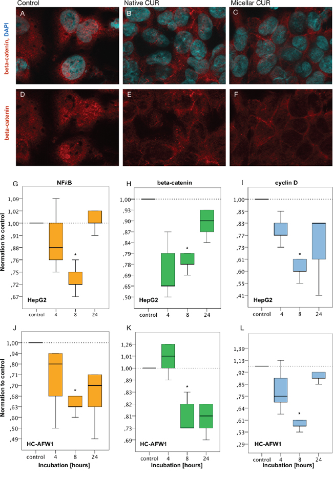 Curcumin modulates the distributional pattern of beta-catenin in HC-AFW1 cells in immunohistochemistry and reduces mRNA of beta-catenin, NFkappaB and cyclin D1 in RT-PCR.