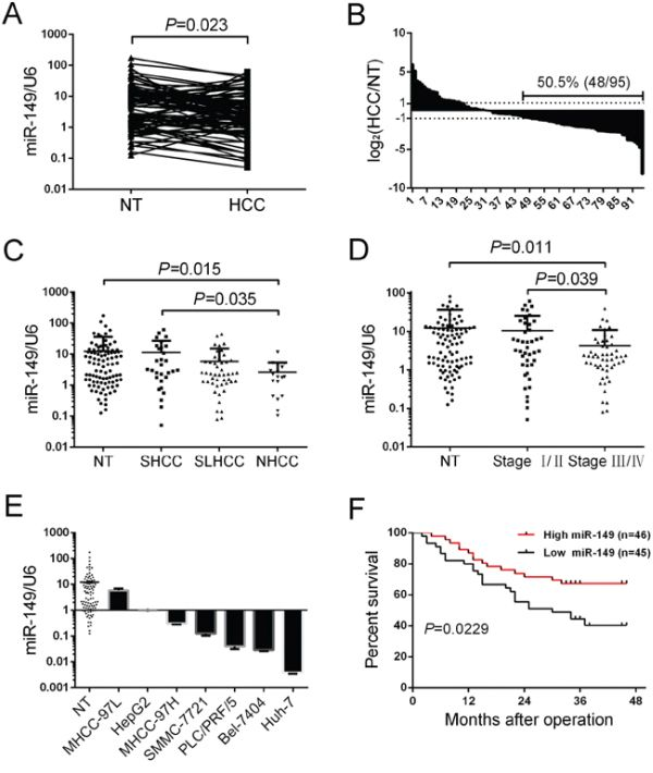miR-149 is frequently down-regulated in human HCC tissue and associated with poor clinicopathologic features and a low postoperative survival rate.