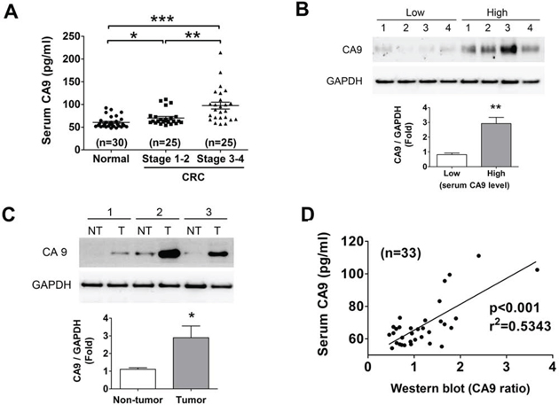Evaluation of CA9 as a CRC biomarker.