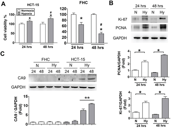 Hypoxia induced cell proliferation and CA9 overexpression in human CRC cells.