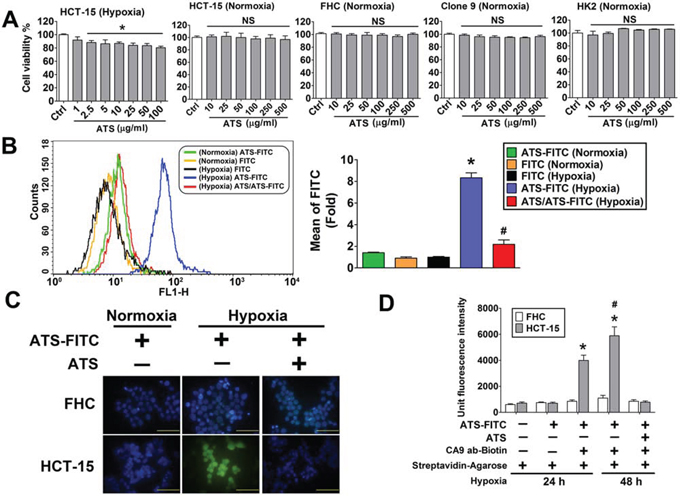Effects of ATS on HCT-15 cell viability and interaction with the CA9 under hypoxic condition.