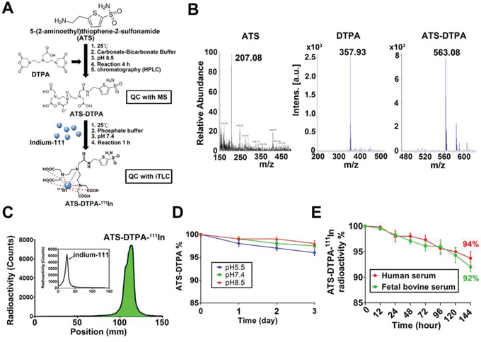The ATS-DTPA-111In synthesis and stability assay.